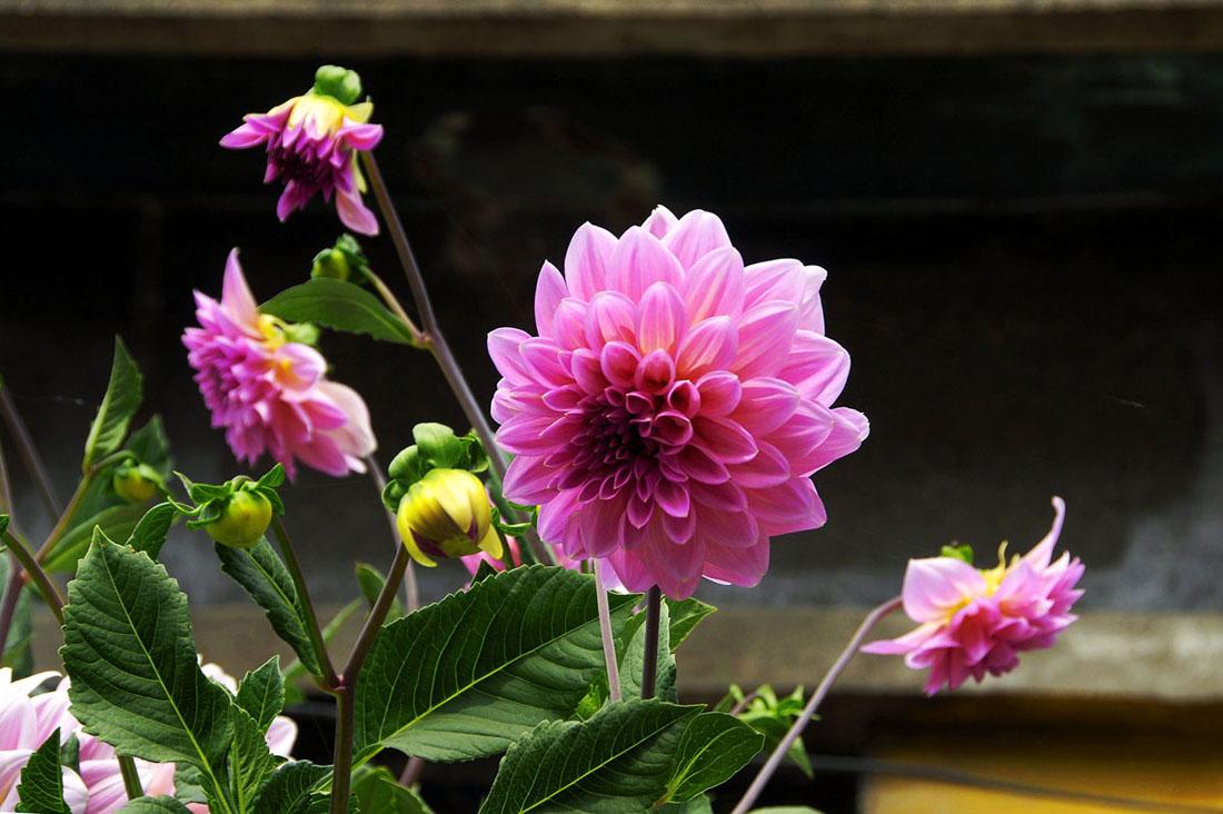 夏季花草养护的四大要点有哪些