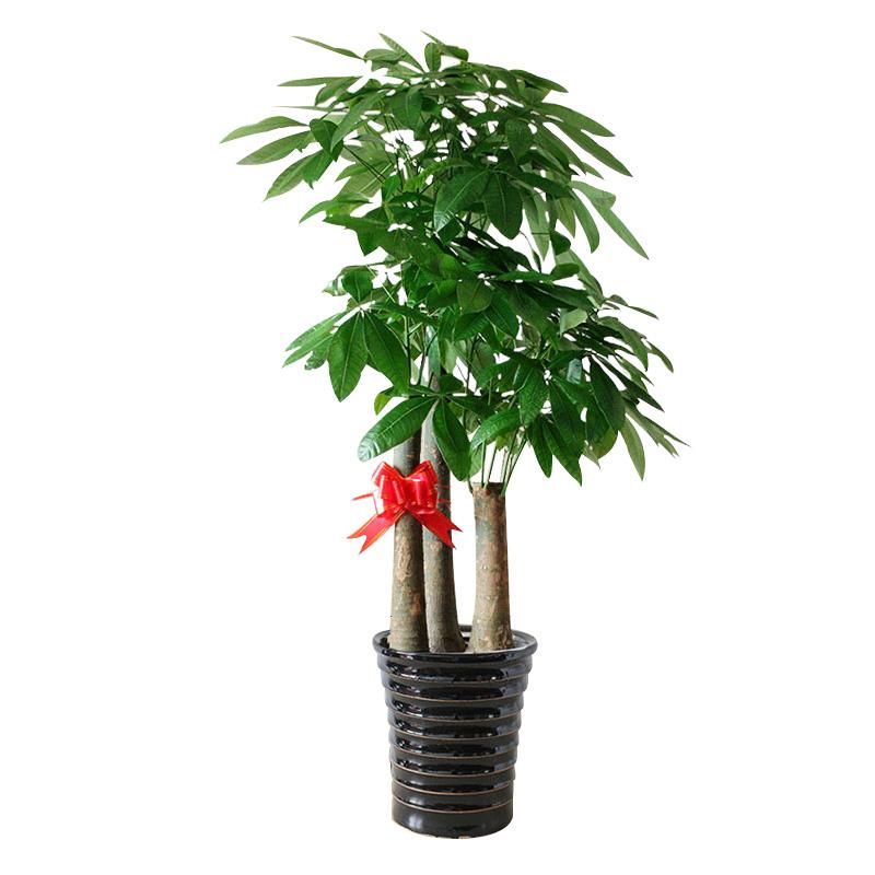 春季移栽花木的四个注意事项是什么