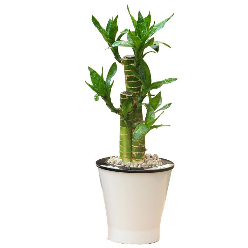 放哪些植物可以给我们转运