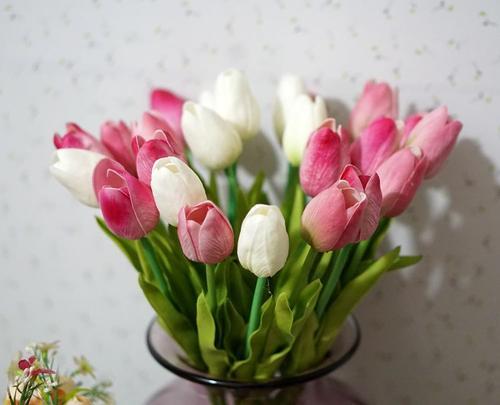 盆栽郁金香的养殖方法有哪些