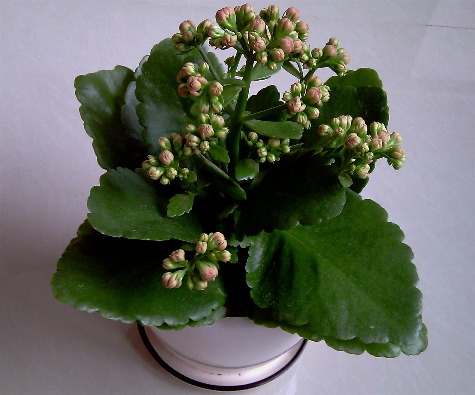 12种长养植物不开花,从这几个地方找原因!