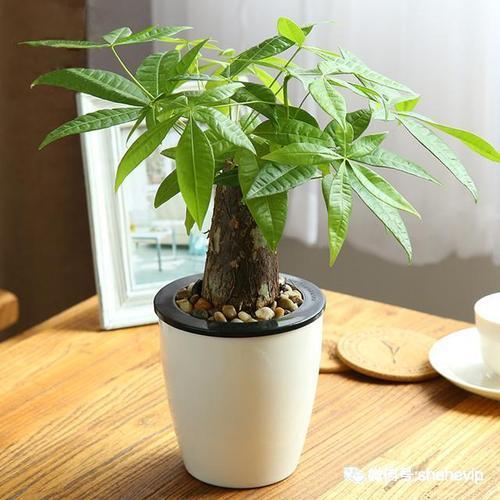 6种植物*适合家里养 养护方法简单但重要