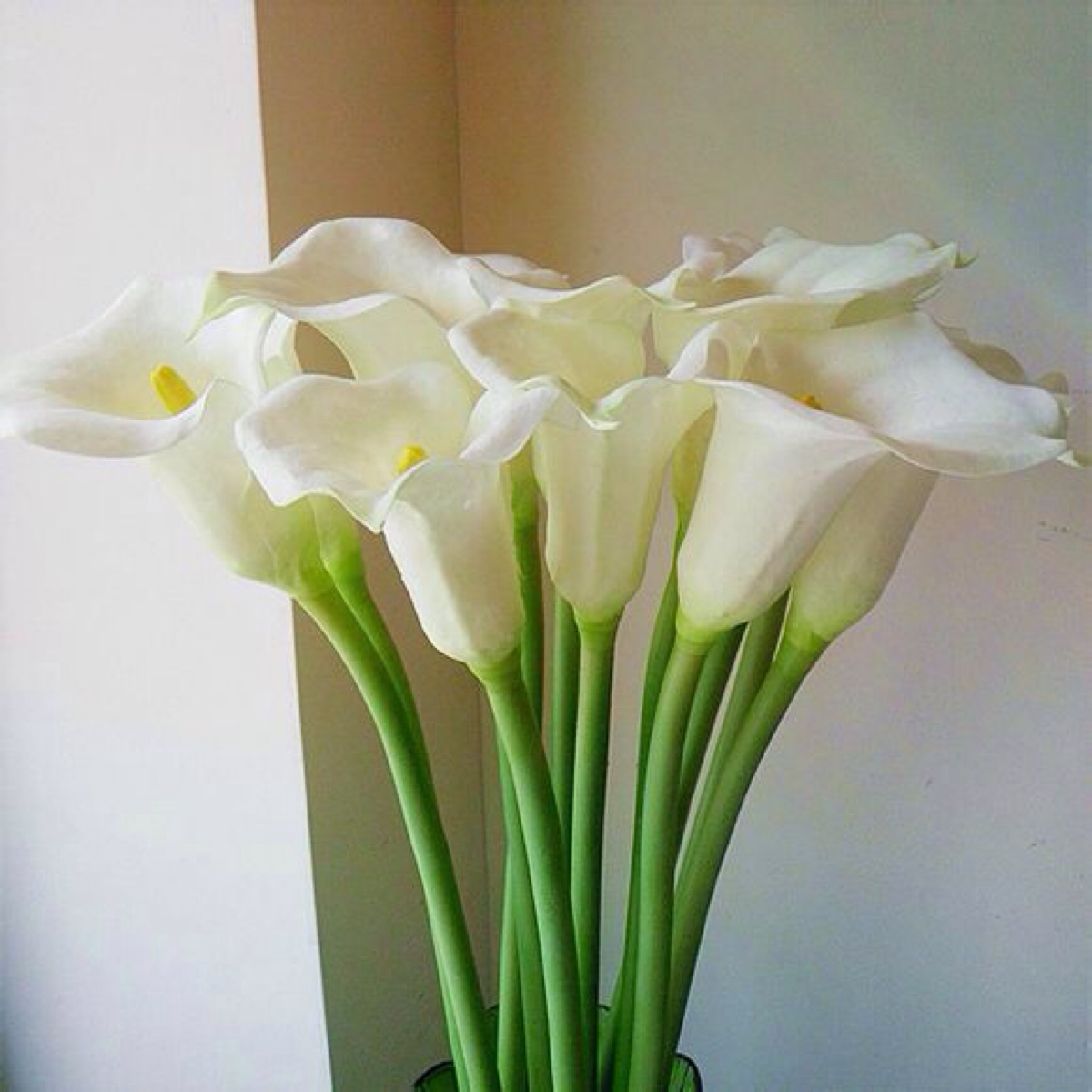 开学季送什么花给学生寓意美好