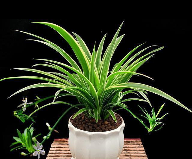 哪些观叶植物适合家庭栽培