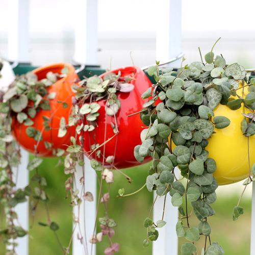 吊盆植物怎么养护?户外吊盆植物的栽培重点是什么