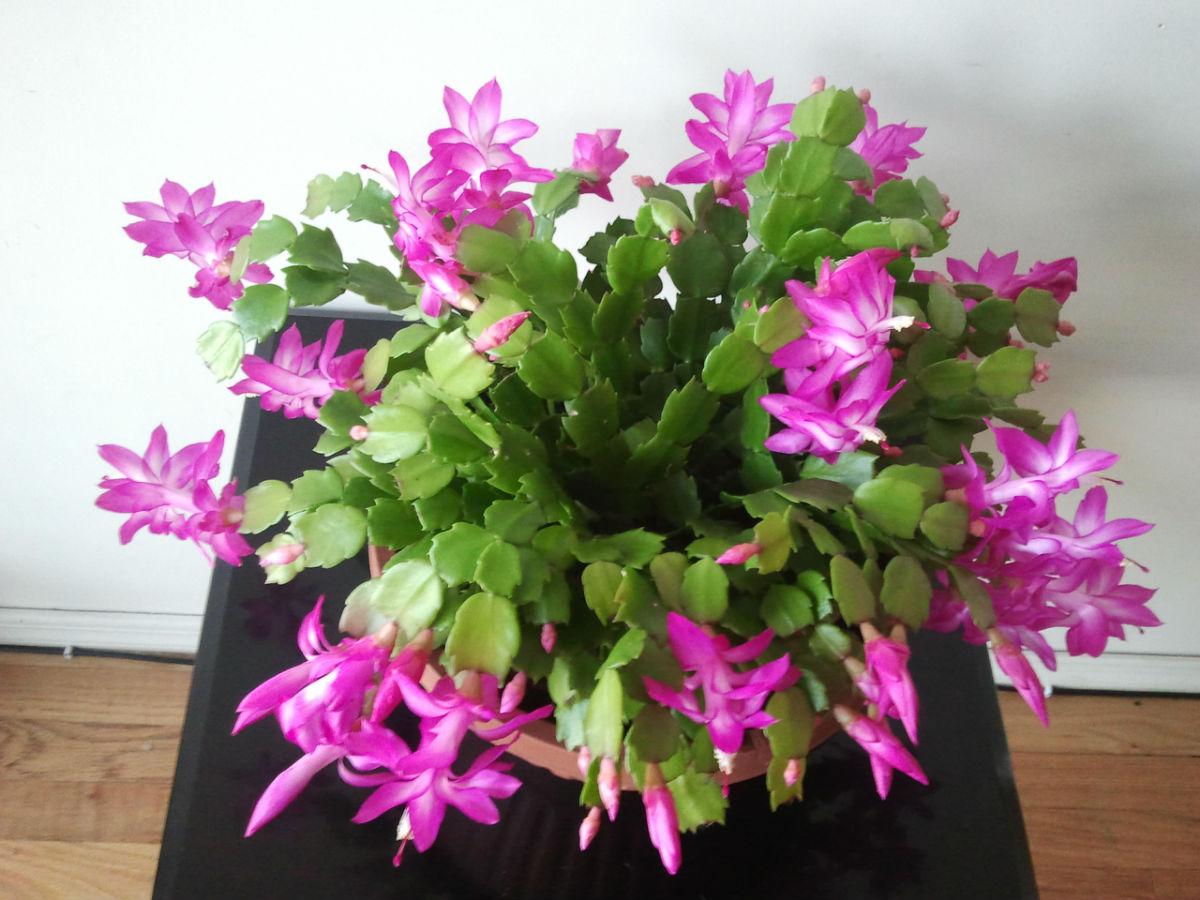冬季家庭盆栽花卉如何安全越冬