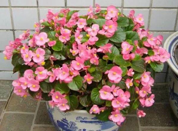 常见花卉的冬季养护技巧是哪些呢