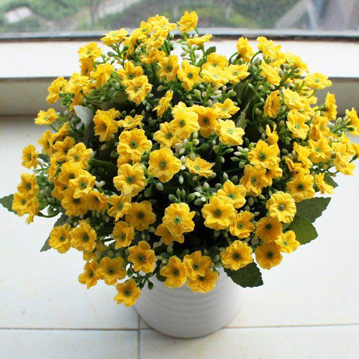 初冬盆花怎么种初冬盆花的护理要点是哪些