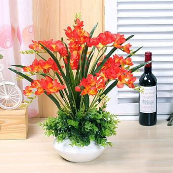 香雪兰的盆栽要点是什么
