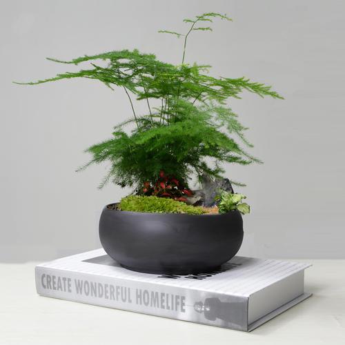 吊兰、文竹、芦荟、滴水观音、绿萝等养殖方法是什么