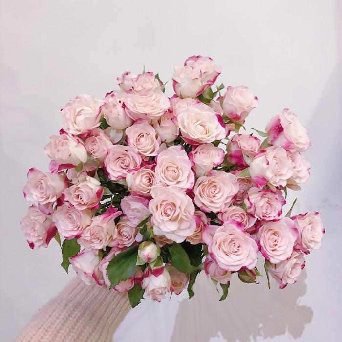 粉红色玫瑰花代表什么?美好的初恋/爱的宣言等