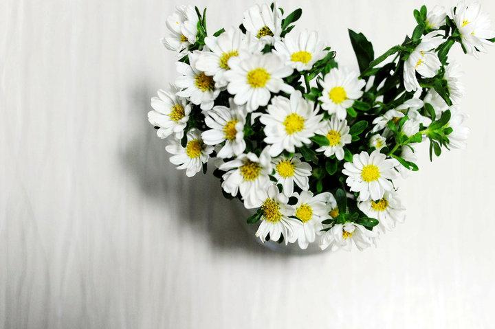 雏菊的外形特点与品种简介