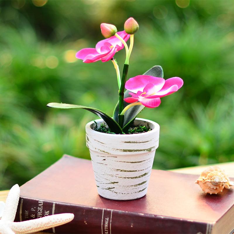 蝴蝶兰花后养护及繁殖方法有哪些