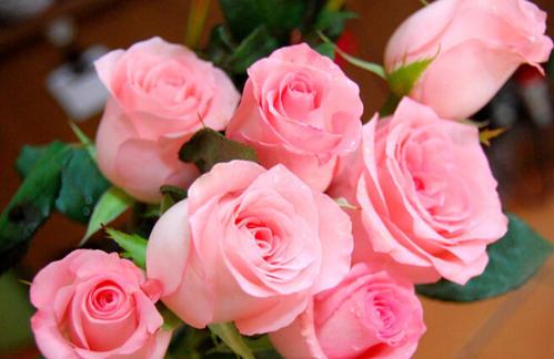 戴安娜玫瑰花语是什么,高贵优雅/幸福浪漫/感激感动