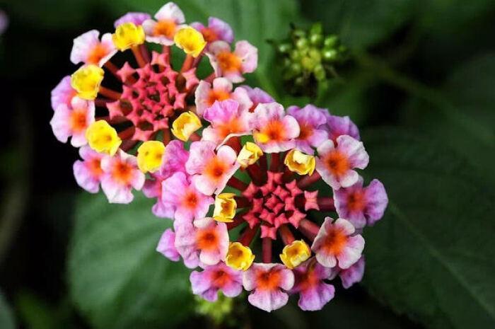 不用怎么管理的耐旱性强的植物有哪些
