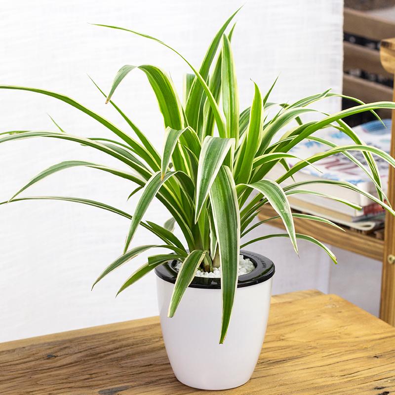 办公室水培植物养护,记住这几点就能养好!