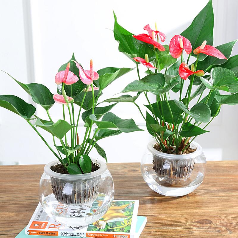 冬季选什么水养植物?水培植物冬季养护要点