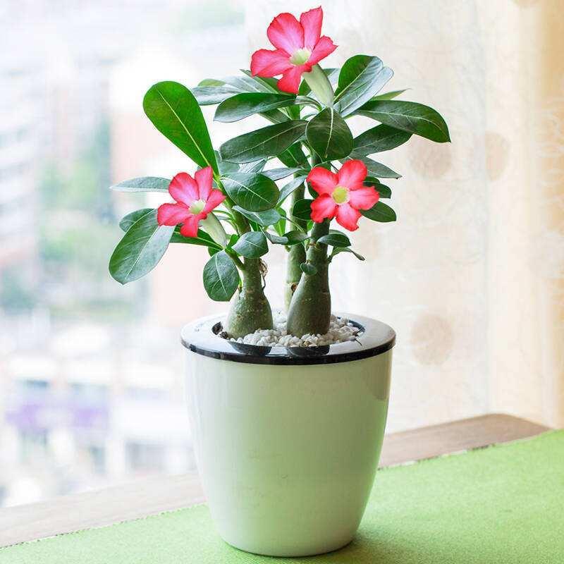 除了仙人掌还有哪些耐旱的植物