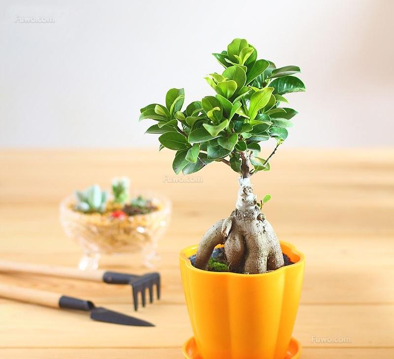 盆栽长斑、掉叶子怎么办?教你解决养花难题