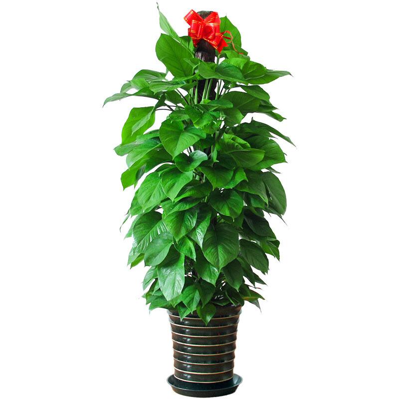 盆栽植物为什么要松土?松土的技巧和注意事项!