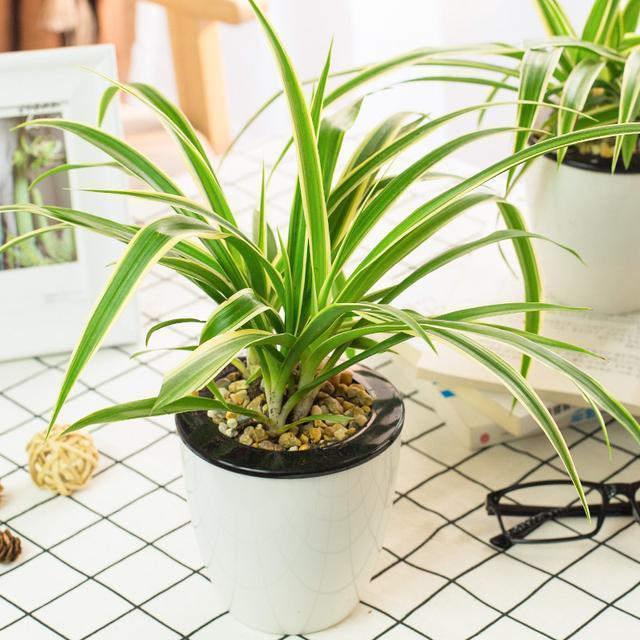 常见24种植物养护技巧,有了这个再也不怕养不活花