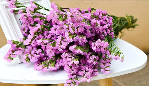 常用的鲜切花——勿忘我