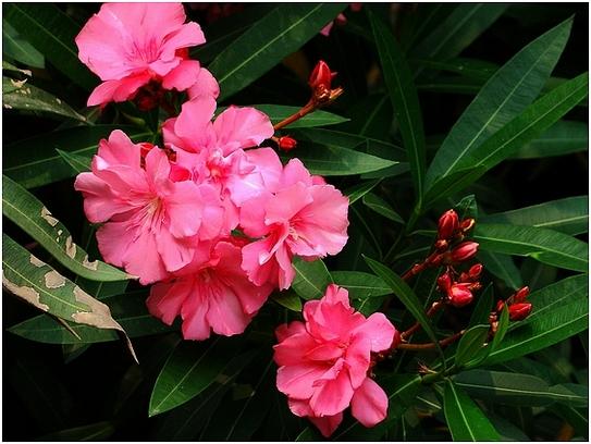 5种有毒花朵,路边的野花可别乱采