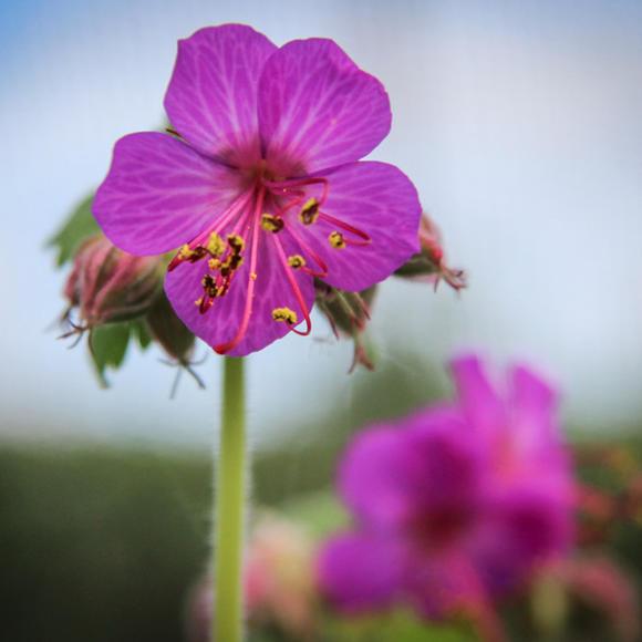 6种罕见的耐阴植物科普,没有太阳也能养得很好!