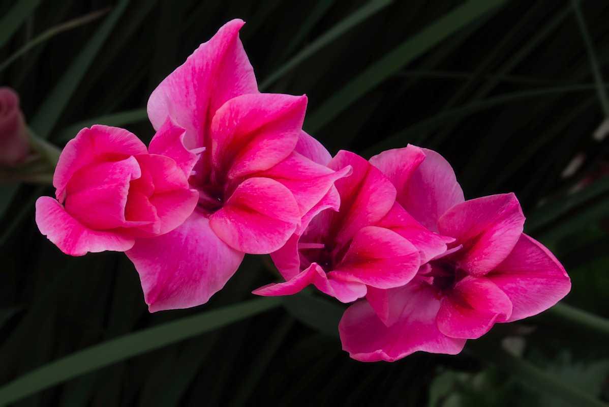 9种适合在书房养的花!书房养花要注意哪些要点