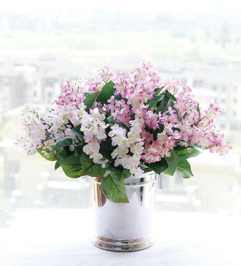 常见花卉——丁香