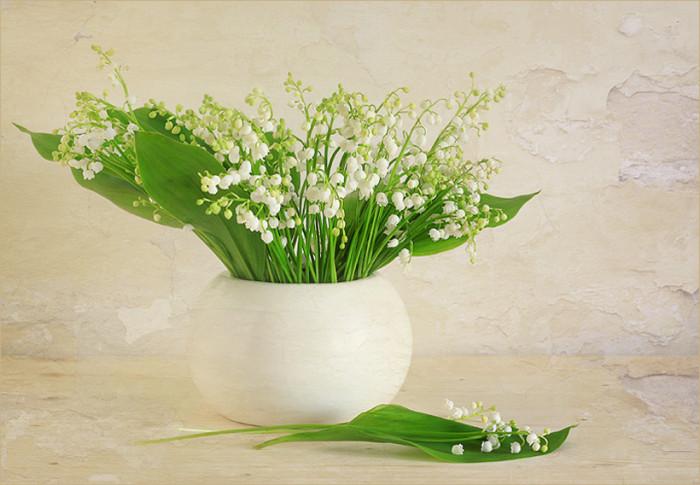 常用的鲜切花——铃兰