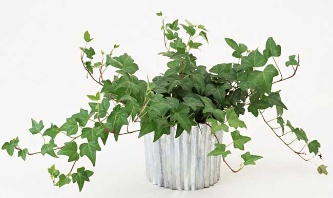 哪些绿植吸收甲醛?更多绿植养护知识