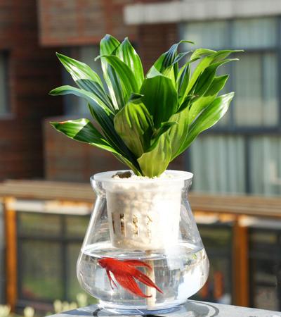 水培植物如何防蚊虫