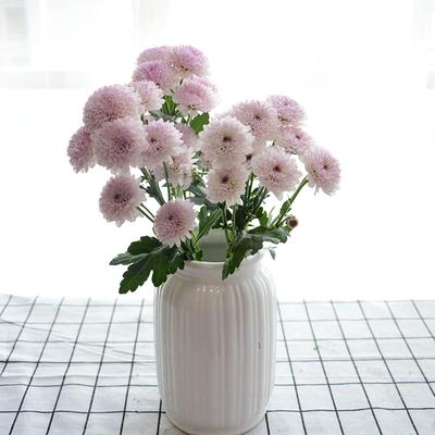 菊花如何养护?怎样才能养好菊花