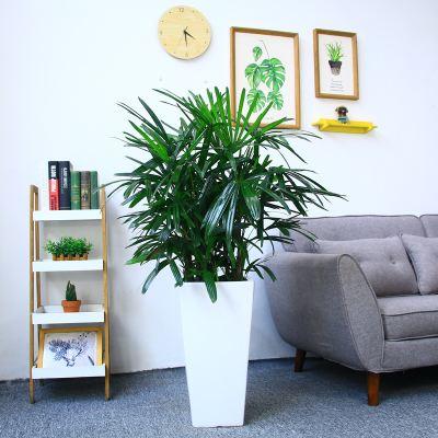 适合冬天养护的耐寒植物有哪些
