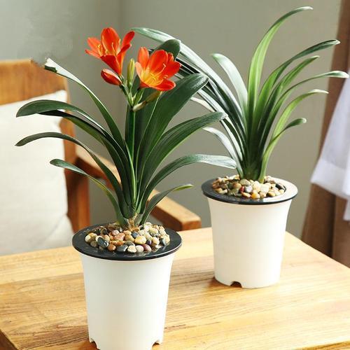 室内养花十要素家庭养花有什么技巧