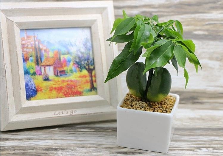 能让你发财的除了发财树还有哪些植物
