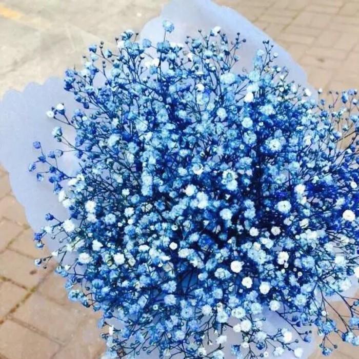 常用的鲜切花——满天星