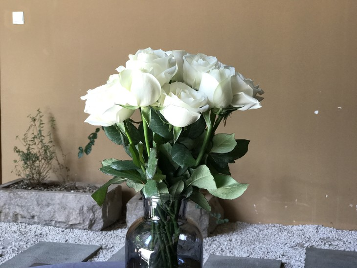 常用的鲜切花——坦尼克白玫瑰