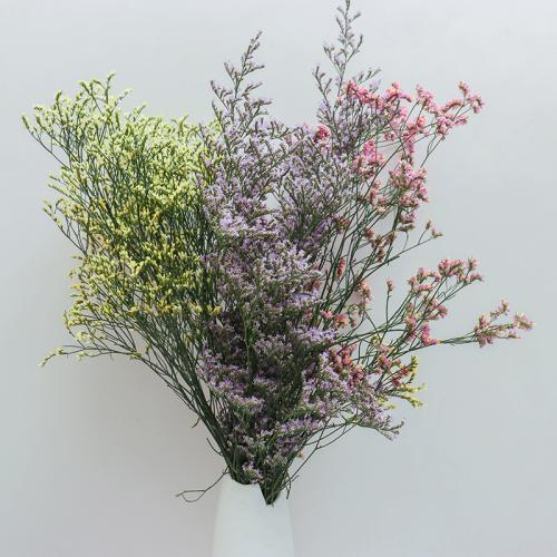 常用的鲜切花——情人草