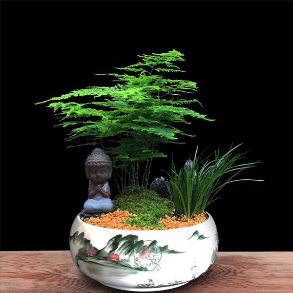 常用的鲜切花——文竹