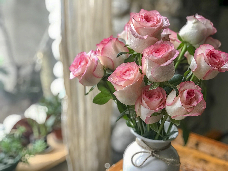 常用鲜切花:红袖玫瑰