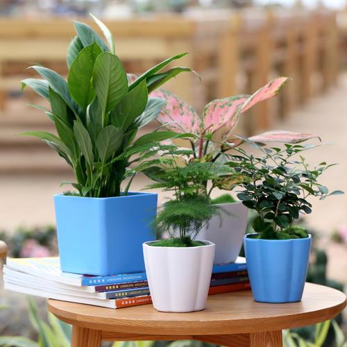 怎么养好办公室的花草?