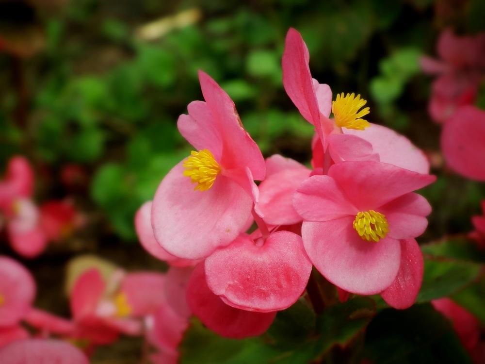 植物干枯发黄怎么办?教你10招对症下药!