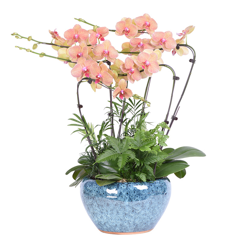 *适合家居的花卉有哪些