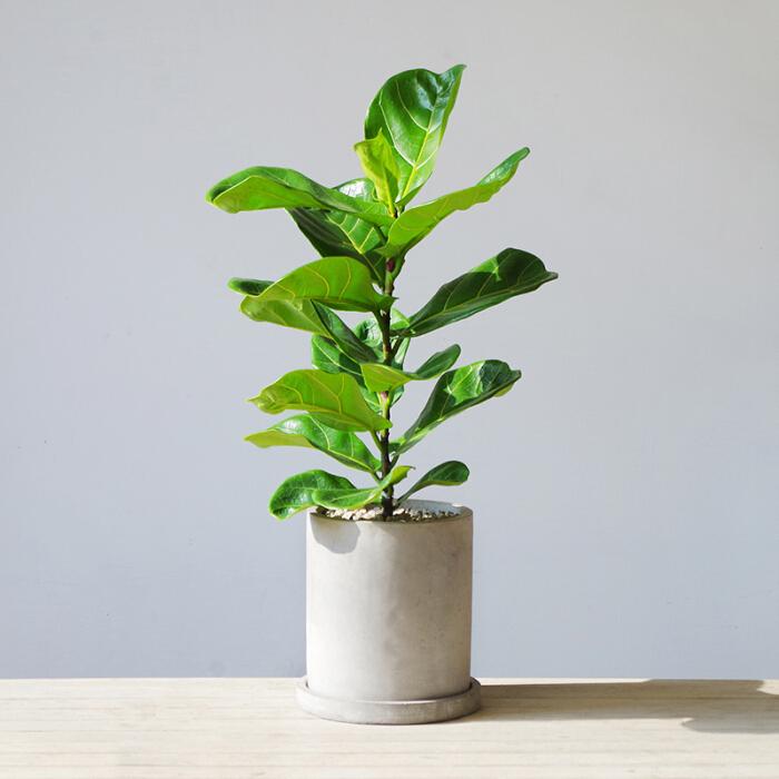 5款北欧风网红植物,给你的家添一抹小清新!
