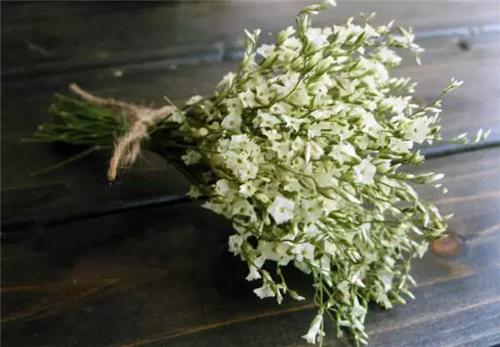 水晶草是花语是什么?是否适合摆放在室内