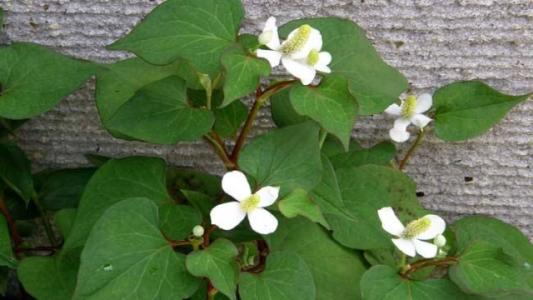 哪些植物可以治病呢?