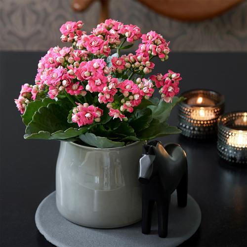 能净化空气和促进睡眠的花,养10盆都不嫌多!