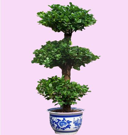 这两种盆栽植物能聚财赶紧记好了!